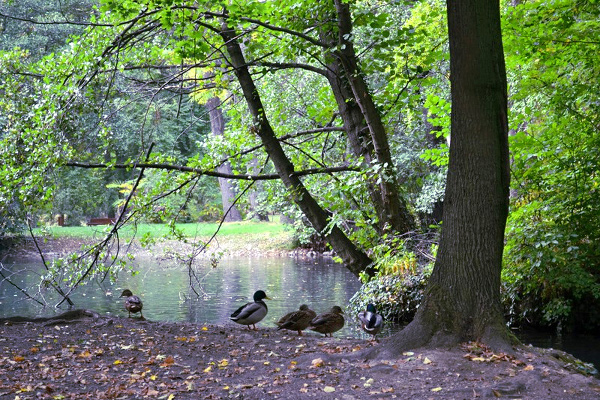 A photo of the ducks resting by the pond.